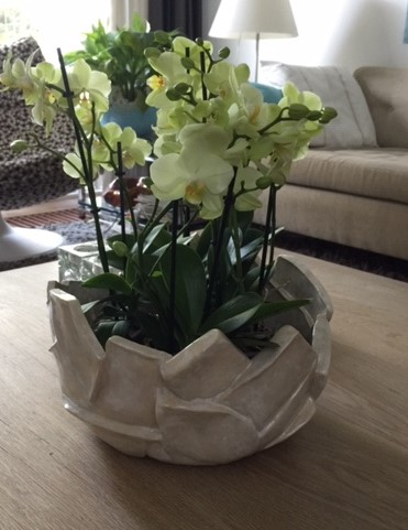 design schaal voor orchideen
